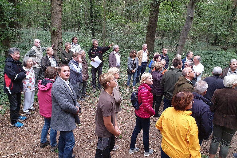 Klimaschutz: Wiederaufforstung der Wälder muss angepackt werden