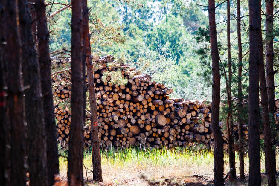 """""""Alle Potenziale beim Holz nutzen, die wir im Land haben"""""""